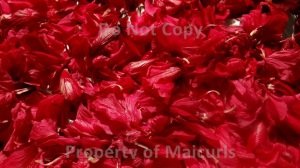 Hibiscus Flowers For Hair, Health and Skin